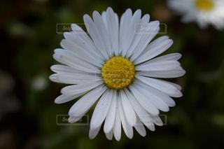 花 マクロの写真・画像素材[3074651]