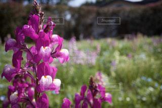 花の写真・画像素材[3074738]