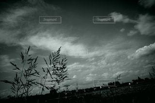 空の雲の群の写真・画像素材[3344370]