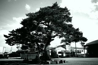 この木なんの木の写真・画像素材[3344375]