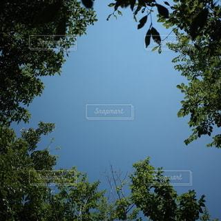 緑と青の写真・画像素材[3564635]