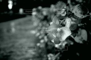 雨露の花の写真・画像素材[3765577]