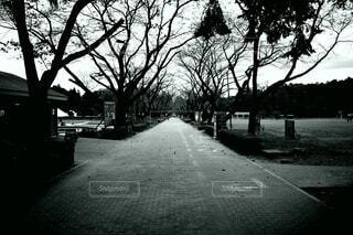 樹々に囲まれた通りの写真・画像素材[3765580]