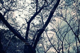 「桜と空」の写真・画像素材[4284456]