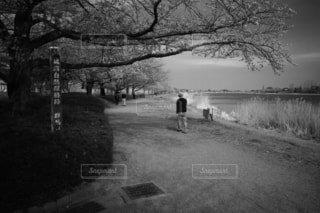 「桜と私」の写真・画像素材[4284453]