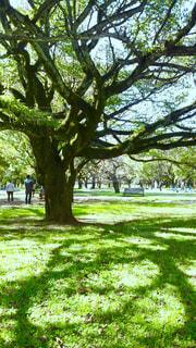 木の陰 - No.172211