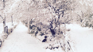 雪化粧の写真・画像素材[227550]