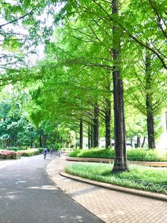 公園の並木の写真・画像素材[508304]