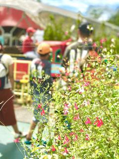 近くの花のアップの写真・画像素材[716950]