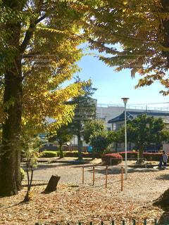 秋の陽だまりの公園の写真・画像素材[888733]