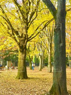 公園の木々の写真・画像素材[890580]