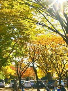 公園の木々 - No.890591