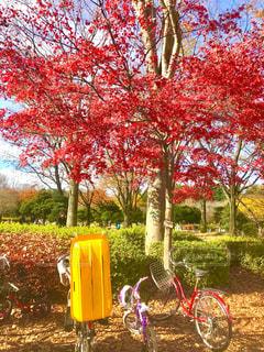公園の木々の写真・画像素材[890598]