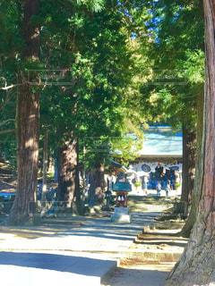 神社の参道の写真・画像素材[940725]
