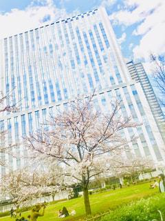 桜と空と - No.1077753