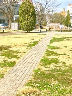 天気のいい公園の写真・画像素材[1087269]