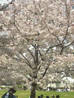 桜の下で - No.1089264