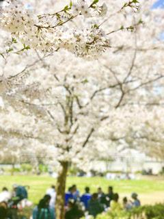 お花見盛りの写真・画像素材[1090030]