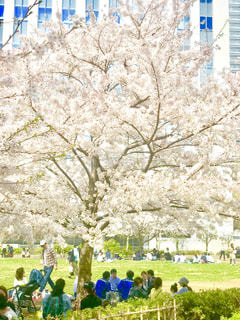 お花見盛りの写真・画像素材[1090818]