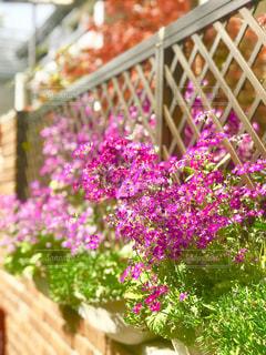 春の草花の写真・画像素材[1113374]