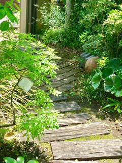 庭園の緑の写真・画像素材[1155965]