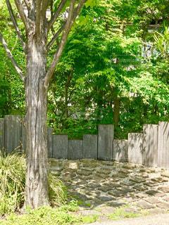 樹木のある庭の写真・画像素材[1215653]