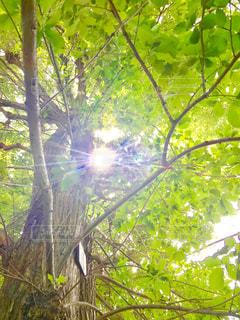 夏の木漏れ日の写真・画像素材[1234117]