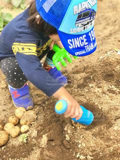 ジャガイモを夢中で掘る子供 - No.1238021