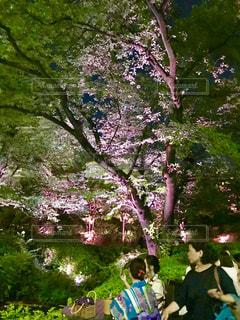 毛利庭園のライトアップの写真・画像素材[1412169]