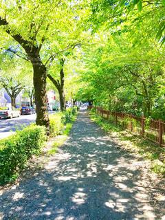 玉川上水の遊歩道を散策の写真・画像素材[1444365]