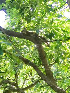 木の上で休むリスの写真・画像素材[1445735]