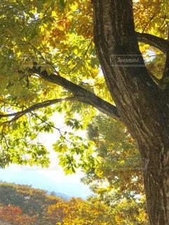 秋の八ヶ岳の写真・画像素材[1450367]