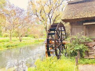 わさび園の清流と水車の写真・画像素材[1455768]