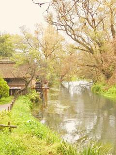わさび園の清流と水車の写真・画像素材[1455770]