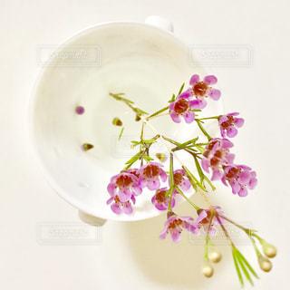 ピンクのかわいい花が、コップに生けてありました。の写真・画像素材[1468711]