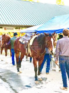 八ヶ岳で乗馬体験の写真・画像素材[1510101]
