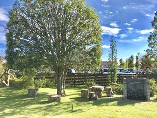 緑の庭と切り株のベンチの写真・画像素材[1534222]