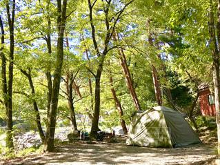 自然を感じる森の中のテントの写真・画像素材[1563666]