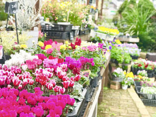 色とりどりの花の写真・画像素材[1593535]