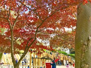 紅葉の小金井公園の写真・画像素材[1637709]