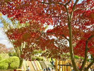 紅葉の小金井公園の写真・画像素材[1637710]