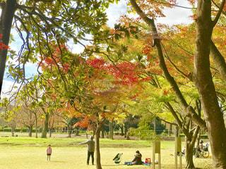 小金井公園の色づいた樹々の写真・画像素材[1644586]