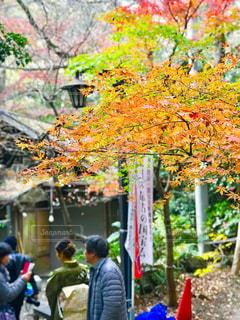 深大寺の紅葉の写真・画像素材[1665403]