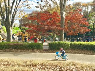 秋の小金井公園で自転車の練習の写真・画像素材[1745867]