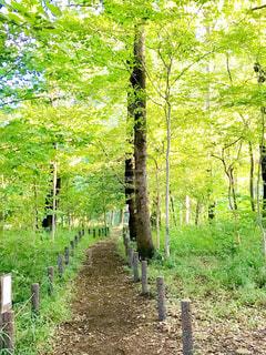 森の中の遊歩道の写真・画像素材[1830549]