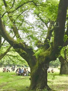 休日に公園で森林浴の写真・画像素材[1873434]