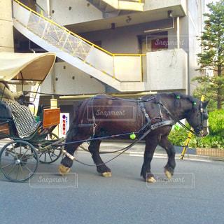 大きな馬が馬車を引いていましたの写真・画像素材[1882215]