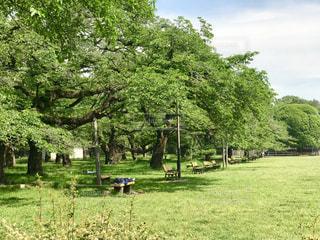 緑豊かな野原の中のベンチの写真・画像素材[2110576]
