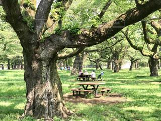 木の陰に座っている木造の公園のベンチの写真・画像素材[2110577]
