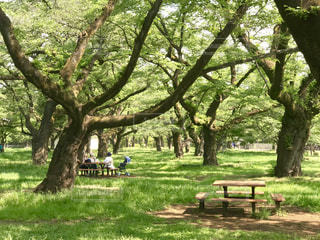 森の中のベンチの写真・画像素材[2190094]